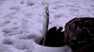 О.Сахалин 2017 год.(Природа ,рыбалка., 2017-01-26T07:43:48.000Z)