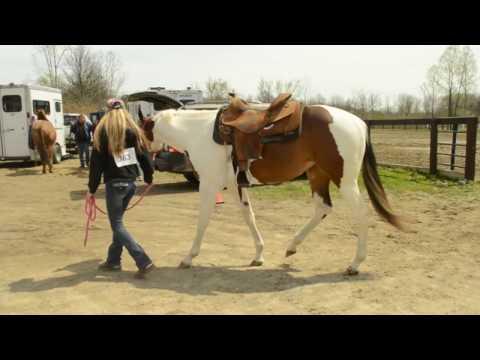 HORSE SHOW VLOG!