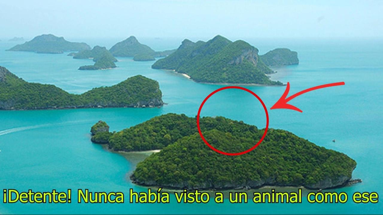 En esta isla habitan las criaturas m s extra as del mundo - La isla dela cartuja ...