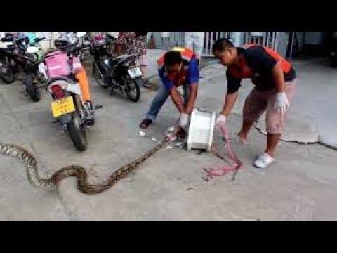 mark the cobra snake@adidas originals condesa mexico city