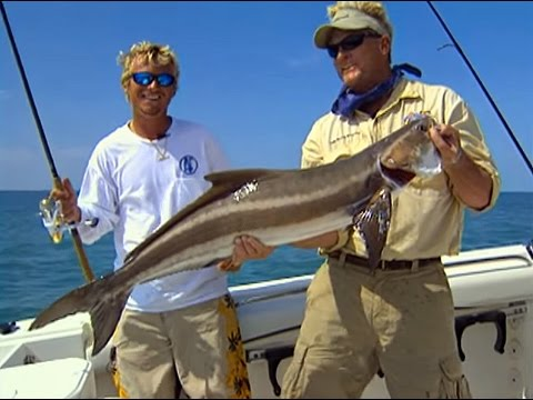 Florida Keys Fishing Offshore for Cobia Fish in Marathon