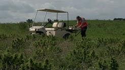 Wisconsin Farmers Legally Growing Hemp Must Pass THC Test