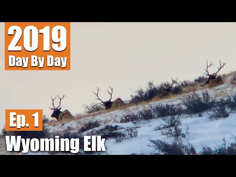 We Found 79 Bulls! | 2019 Wyoming Elk With Uncle Larry (Ep. 1)