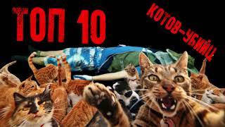 Коты-убийцы ТОП 10