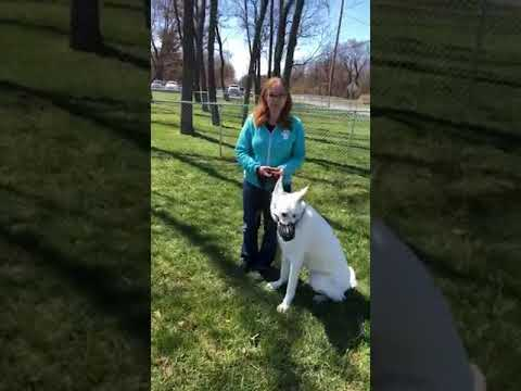 Dog Training Seminar | Group Dog Training