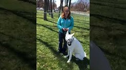 Dog Training Seminar | Group Dog Training
