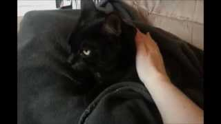 Cats, Bubble Bath, Pedicure and Kindle Thumbnail
