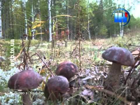 Часто люди плутають отруйні гриби із їстівними
