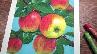 가을 사과 / 오일파스텔화 / Drawing Apple…