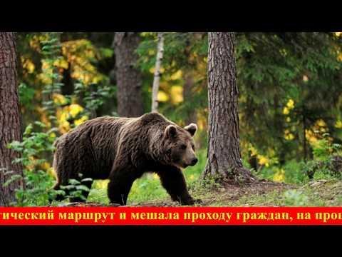 Медведь украл покойника из могилы в Хабаровском крае