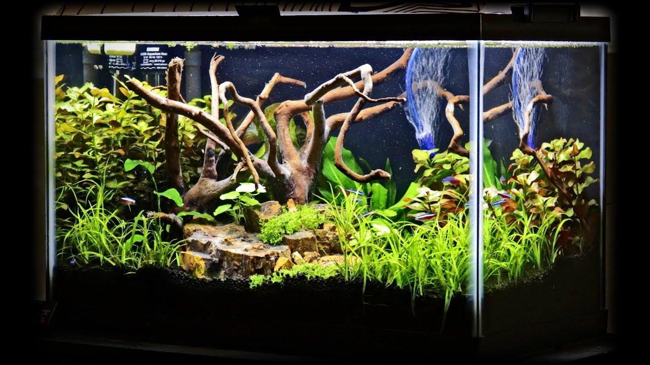 Best Budget Planted Tank Lighting