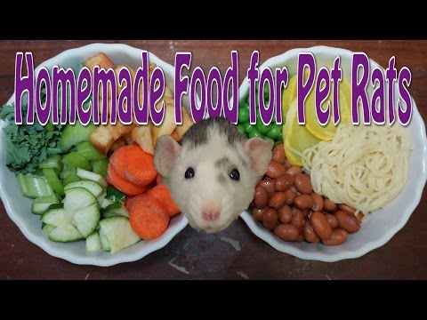 Pet Rat Diet - Requested from YouTube · Duration:  6 minutes 42 seconds