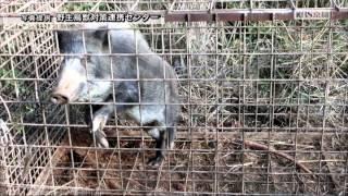 KBS京都テレビ 「あぐり京都」JAグループ京都の有害鳥獣被害対策の取り組み 2015年10月放送