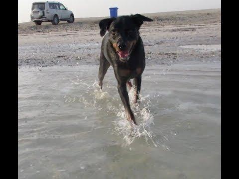 DOG AT THE BEACH (Vlog #190)