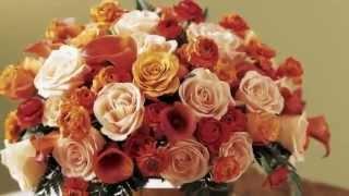 www.BrilLion-Club.com , Konsuelo , Рівне(Детальна інформація на сайті http://www.brillion-club.com/partner/7847- Купити Квіти Рівне Недорого Композиція з Квітів Рівн..., 2014-05-20T18:40:37.000Z)