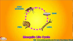Life Cycle  Video for Kids - Science Learning  from makemegenius.com