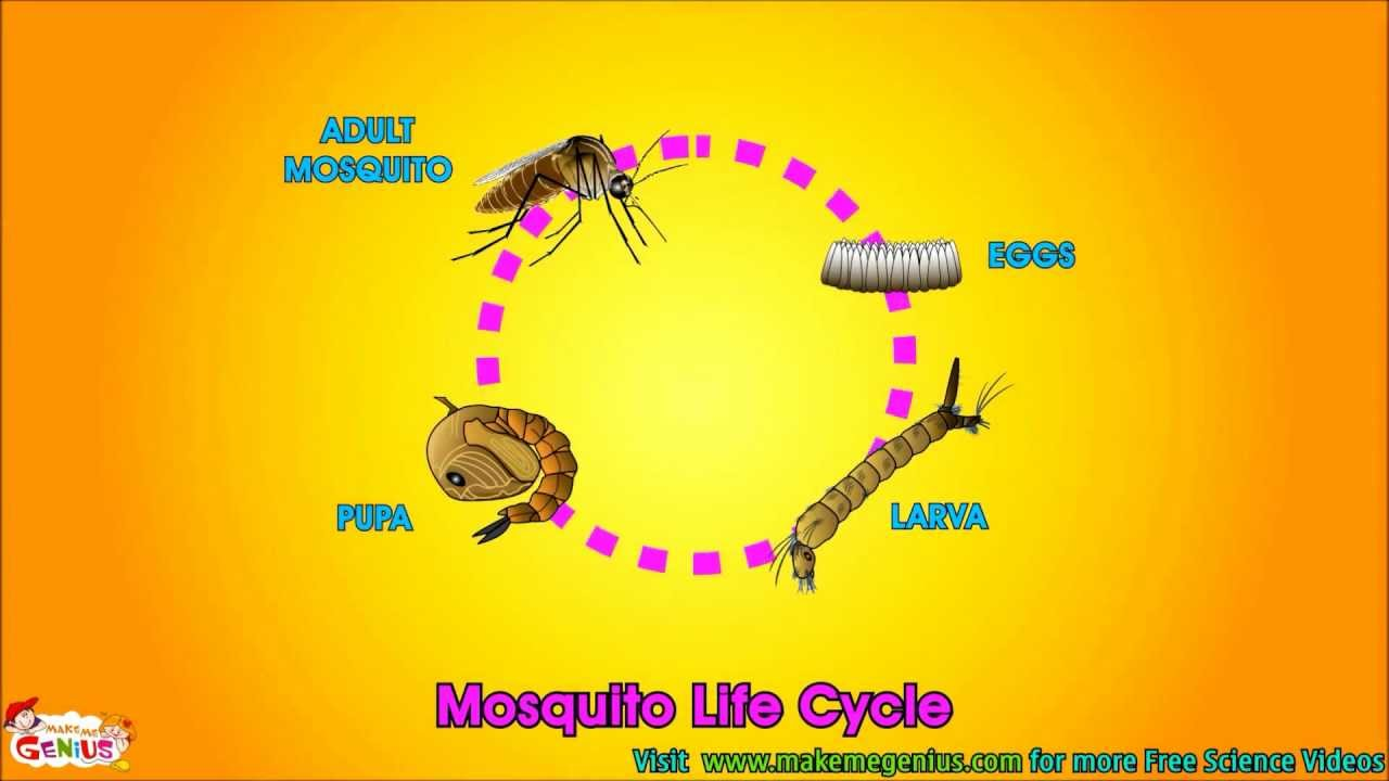 life cycle video for kids science learning from makemegenius com youtube [ 1280 x 720 Pixel ]