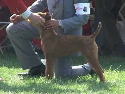 irish terrier club of america the 2008 irish terrier club of america national specialty 3125