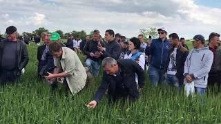 видео Норма высева пшеницы
