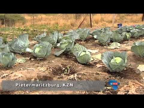 The state of land reform in SA