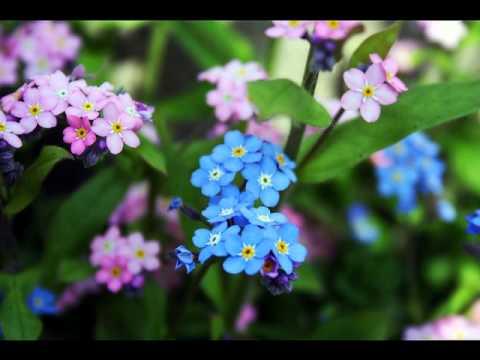 BLUE SPRING    RICHARD ABEL  piano