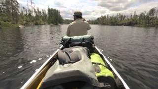 Bear Witness: Year in the Wilderness