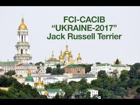 "FCI-CACIB ""UKRAINE - 2017"" 24.08.2017 JACK RUSSELL TERRIER"