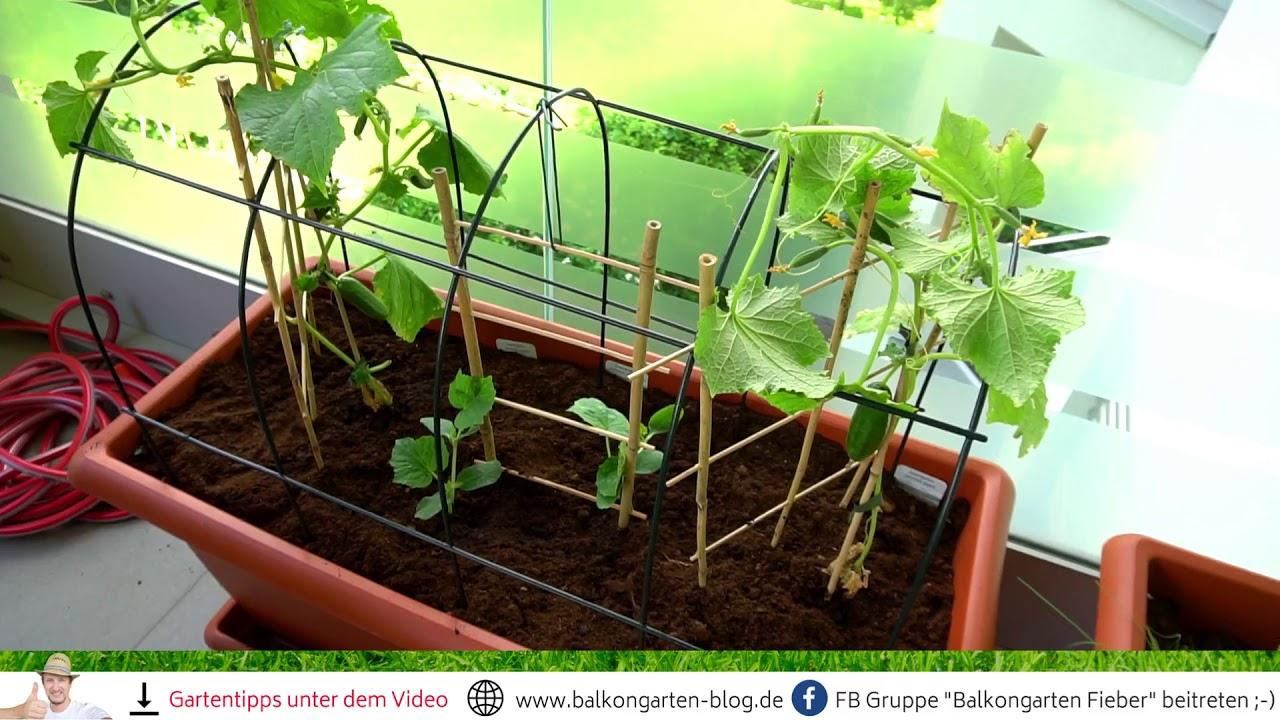 rankgitter pflanzkasten idee 😉 meine balkongarten tipps - youtube