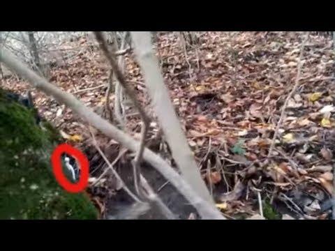 ГНОМ НАПУГАЛ ТУРИСТА В ЛЕСУ странное существо в лесу. загадочные существа снятые на видео