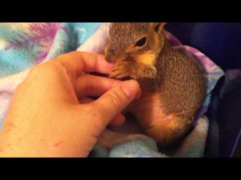My pet squirrel, Sandy. Snuggling, biting, playing, licking, yawning, and being generally cute.
