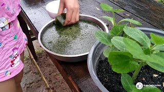 Green grass jelly | How to create a nature plant into jelly | LIFE IN THE COUNTRYSIDE | BEN TRE