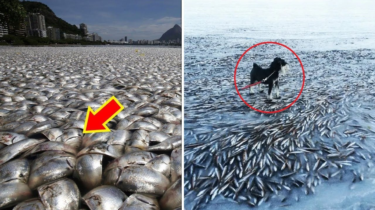 5 ऐसी घटनाये जिन्होंने वैज्ञानिको के भी होश उड़ा दिए Strange Animal Phenomena That Happened On Earth