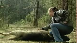 Кому нужен волк? Who needs a wolf? | Film Studio Aves