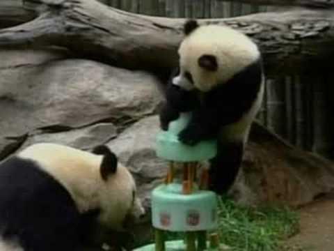 Pandas Birthday Cake