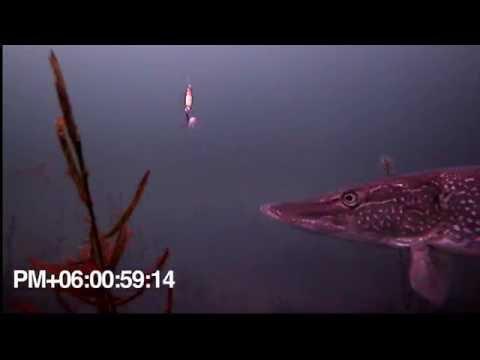 Underwater Camera Showdown