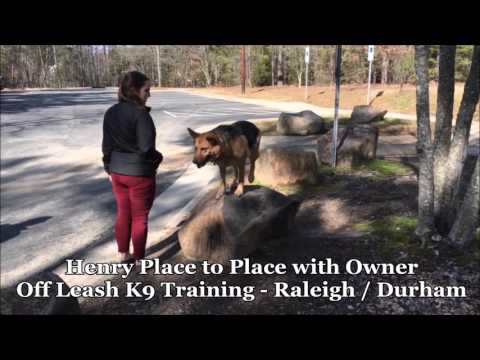 """6yo German Shepherd Mix """"Henry"""" Before and After - Raleigh Durham Dog Training"""