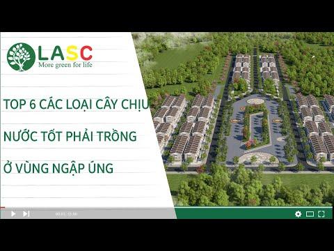 TOP 6 CÁC LOẠI CÂY CHỊU NƯỚC TỐT PHẢI TRỒNG Ở VÙNG NGẬP ÚNG - LASC Việt Nam