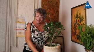 Чтобы дома водились деньги - Денежное дерево(Денежное дерево, что делать чтобы дома водились деньги. Мои советы для того, чтобы дома водились деньги...., 2014-08-19T05:06:35.000Z)