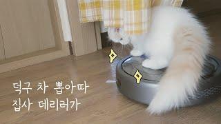 로봇청소기 타는 고양이 덕구 // 로봇청소기를 처음 본…