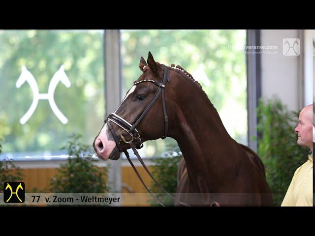 2 nouveaux chevaux pour Juan Matute Guimon