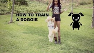 HOW TO TRAIN A DOG! Thumbnail