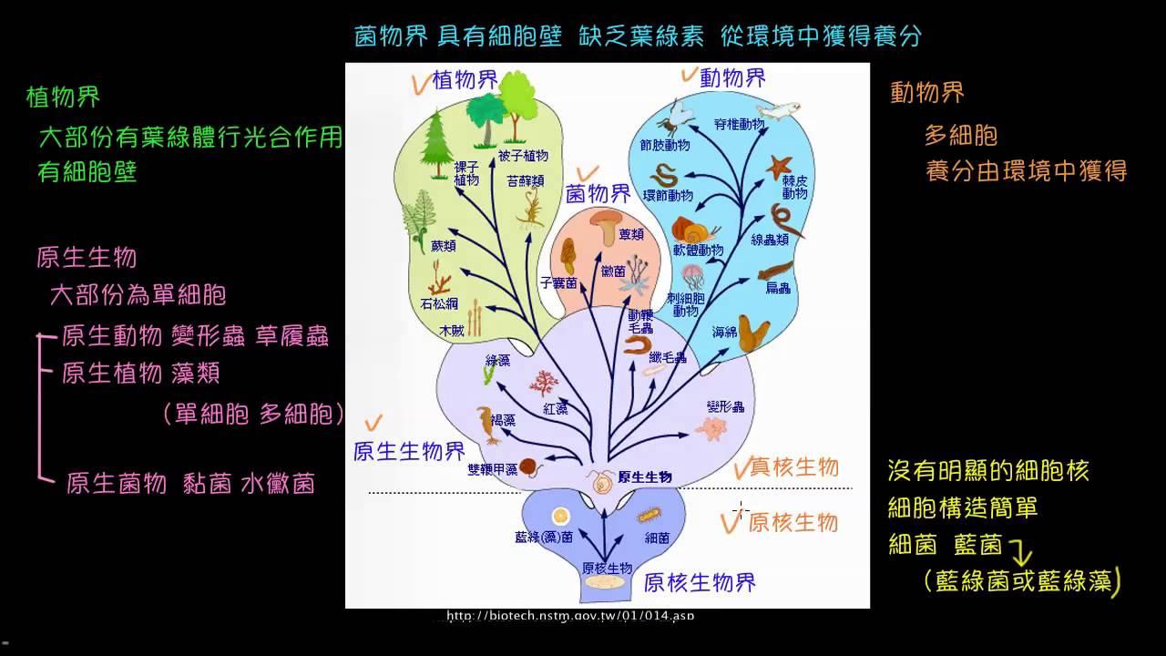 生物的五界分類系統 - YouTube