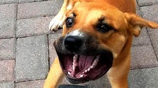 FUNNY ANIMAL VIDEOS OF THE WEEK!