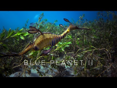 Blue Planet II: Official Trailer