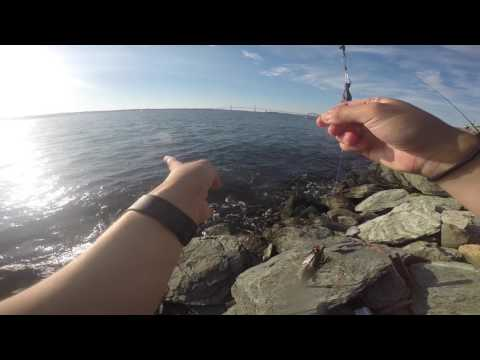 Scup Fishing In Newport, RI