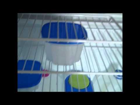 organizing-your-rv:-the-refrigerator