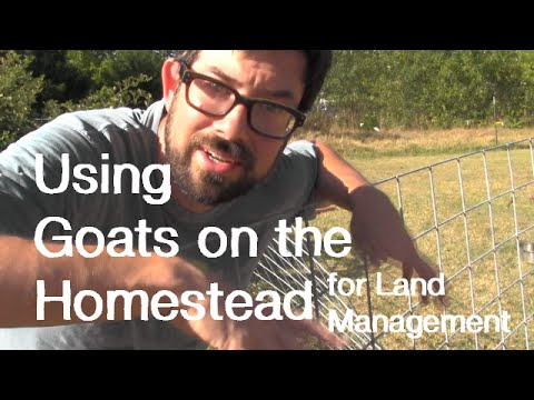 Goats for Land Management - Homesteading