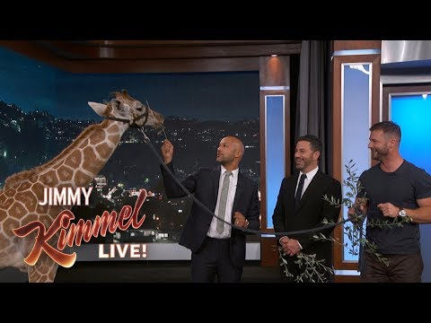 Adorable Baby Animals with Dave Salmoni & KeeganMichael Key