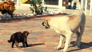 Angry Dogs Vs Cats│Very strange cat dog fight