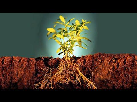 Вопрос: Как улучшить рост растений в квартире?